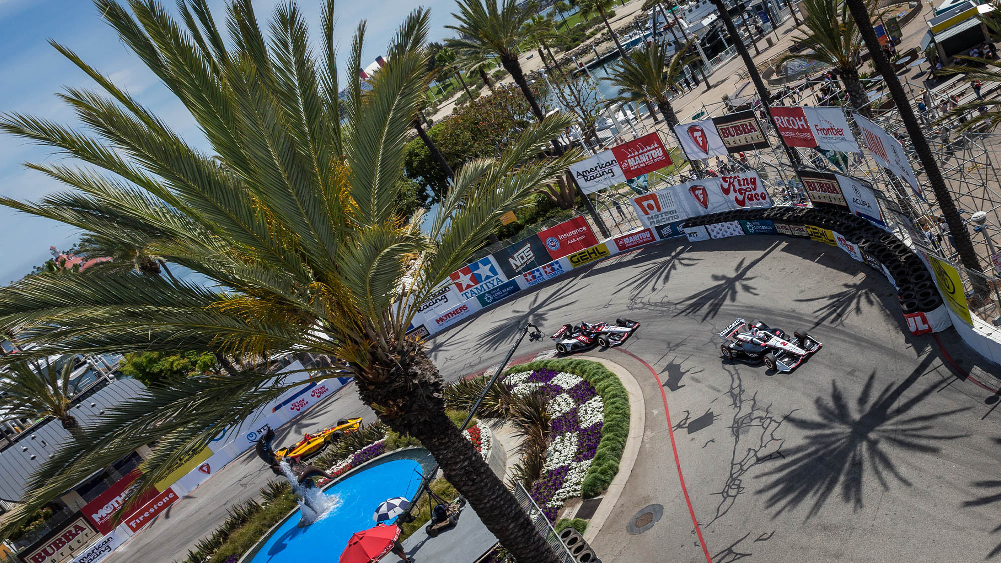 Palm tree and cars in 2019 Long Beach GP